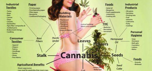 Cannabis-the-modern-use