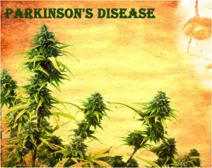 Parkinsons Disease - Wietolie.eu